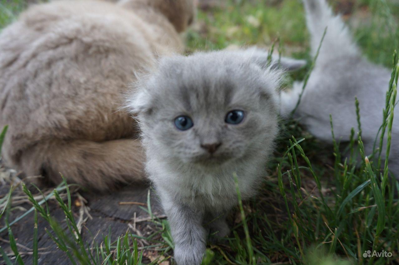 Отдам котят-полукровок в хорошие руки