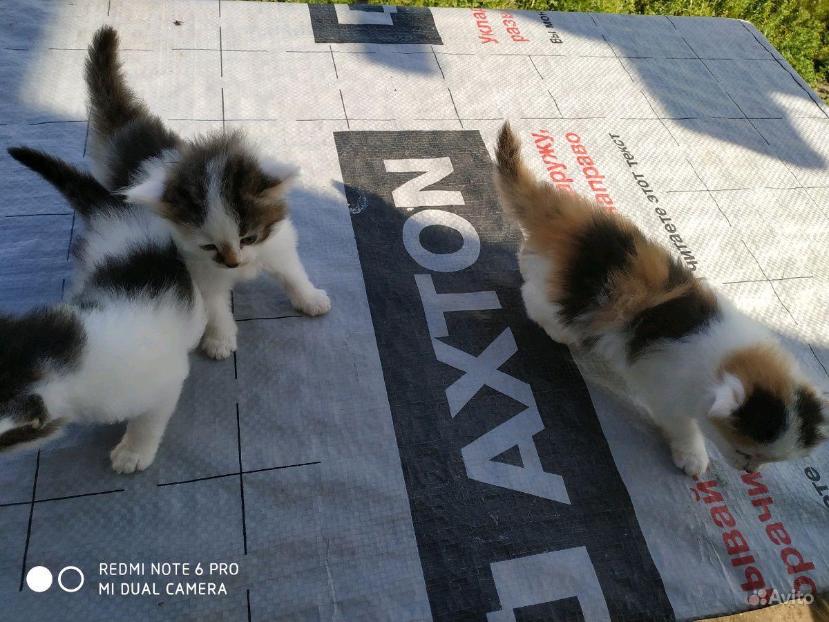 Котята в подарок в Санкт-Петербурге - фотография № 7