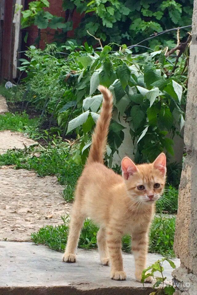 Отдаю котика, 2,5 месяца