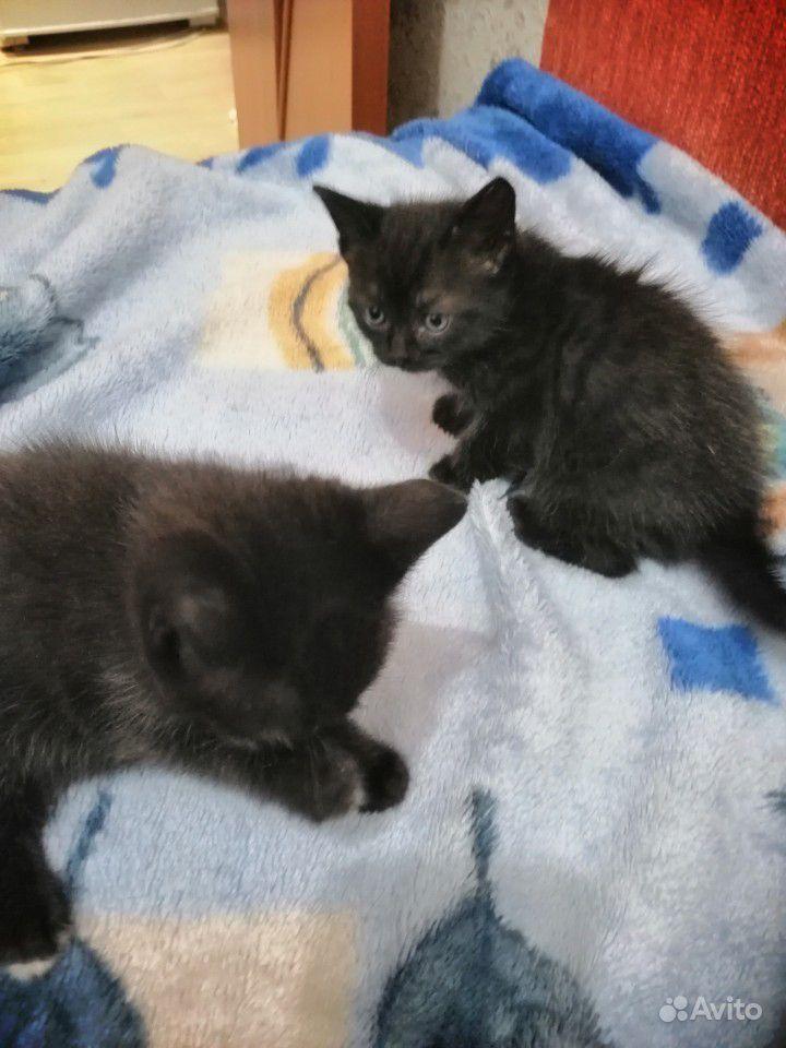 Несколько милых котят)
