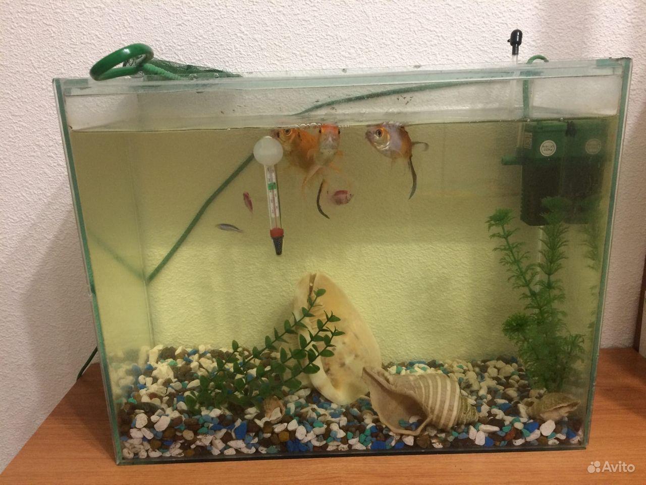 Аквариум с рыбками 30 литров купить на Зозу.ру - фотография № 2