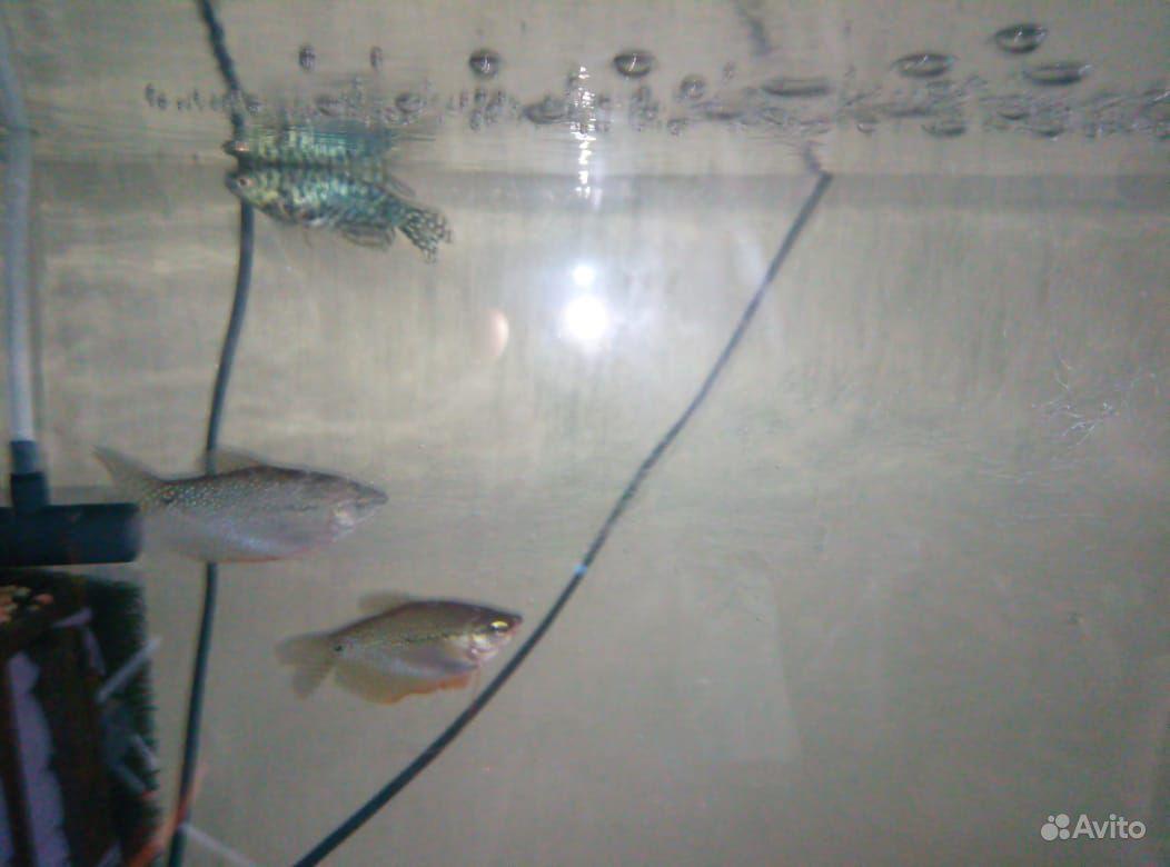 Рыба купить на Зозу.ру - фотография № 6