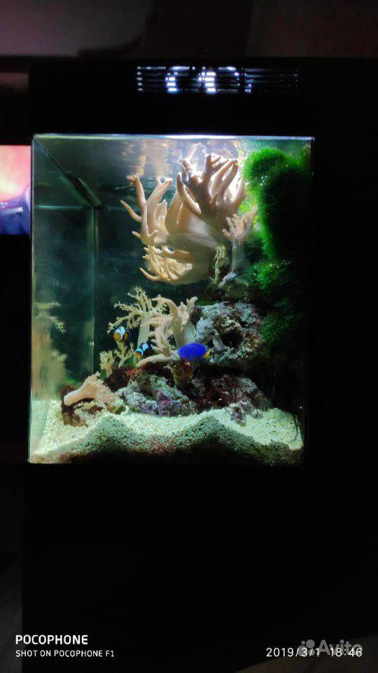 Аквариум 100л с рыбками купить на Зозу.ру - фотография № 1