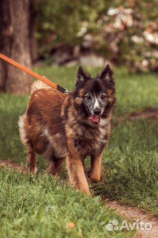 Добрый пес в добрые руки купить на Зозу.ру - фотография № 3