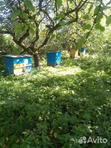 Пчелы с домиками 89082811313 купить 10