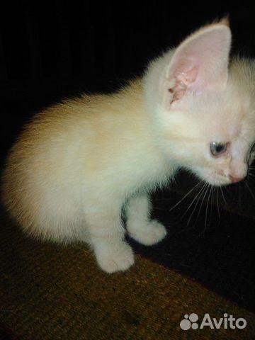 Котята  89375260970 купить 2