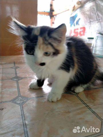 Кошка  купить 7