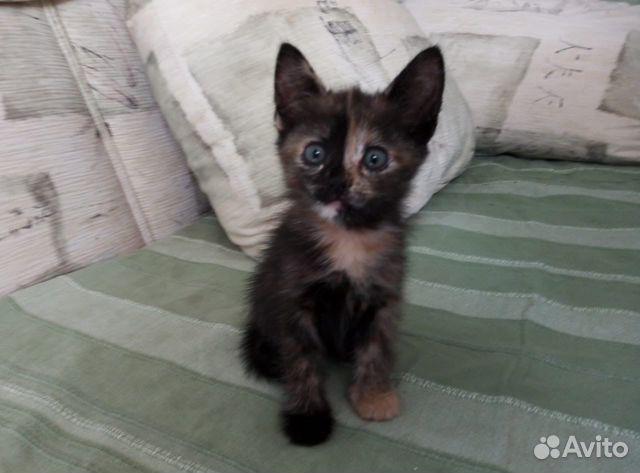 Кошка  купить 2