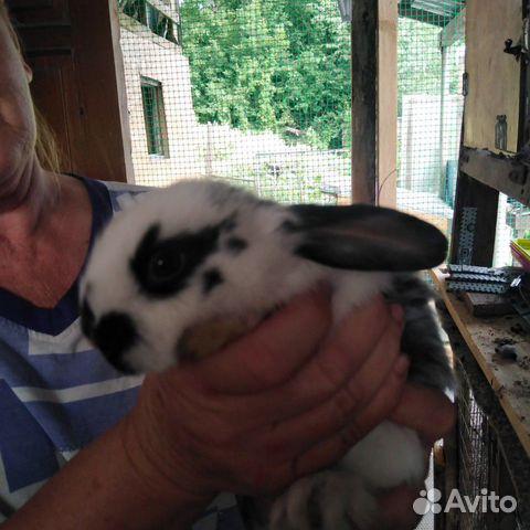 Кролики  89095041049 купить 2