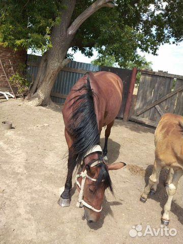 Лошадь с жеребенком  89053862728 купить 2