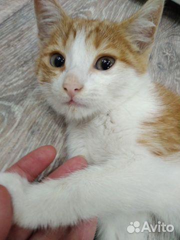 Котеночек 2 месяца в добрые руки  89656987636 купить 2