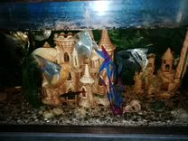 Аквариум 220 литров с рыбками