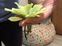 Растения, водоросли