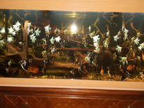 Скалярия мраморная.голубая