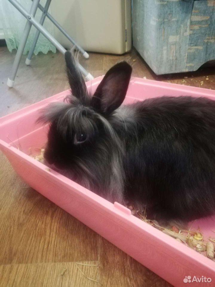 Кролик декоративный  89232499255 купить 1