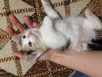 Котенка в добрые руки