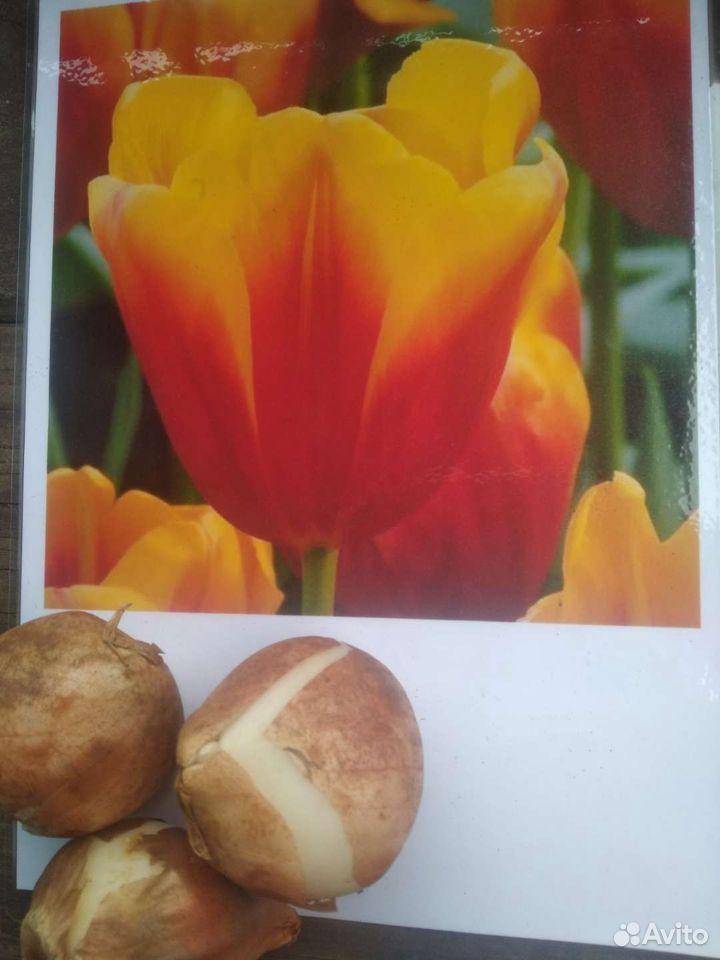 Тюльпаны  89500511750 купить 4