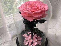 Вечная роза в колбе- неувядающий цветок