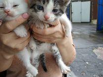 Потрясные котята ищут дом