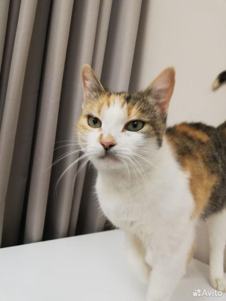 Кошки  89115151100 купить 4
